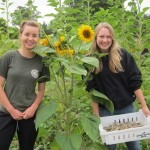 Volunteers in the Sunflower Beds
