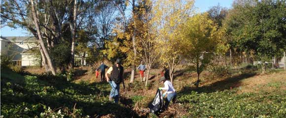 Our mission is to work with our community to enhance and sustain ecological health in Sonoma Valley.