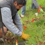 Fryer Creek Restoration