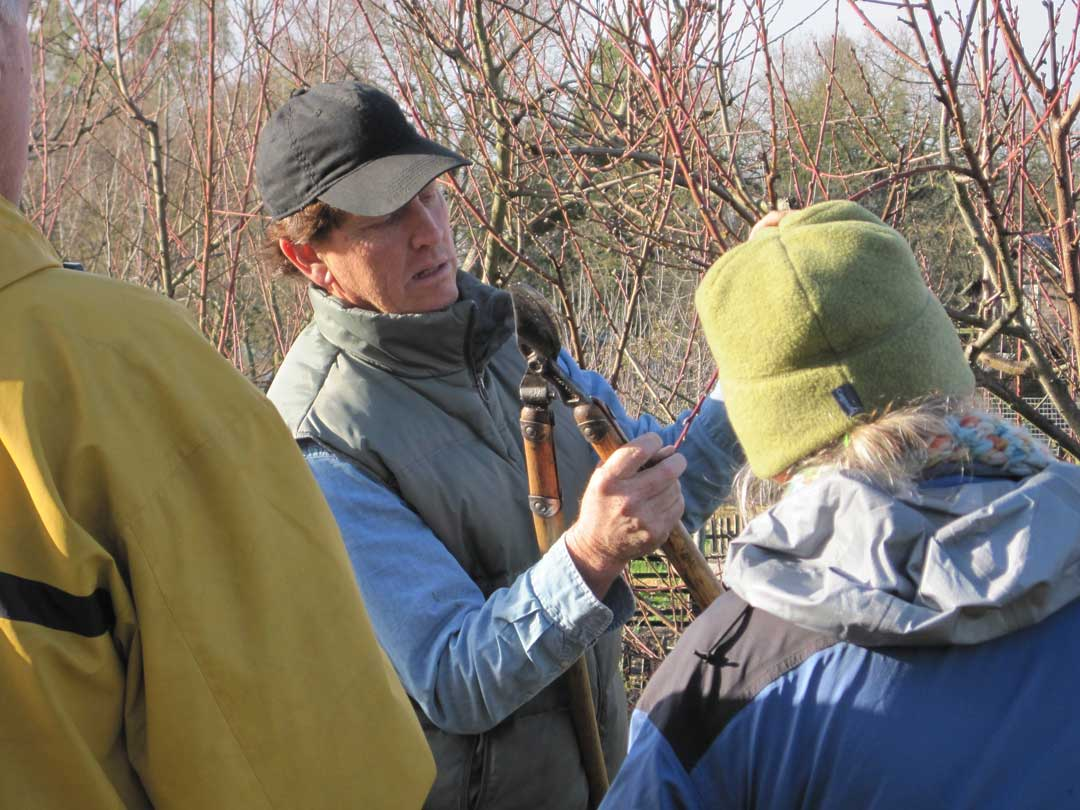Winter Tree Pruning Workshop