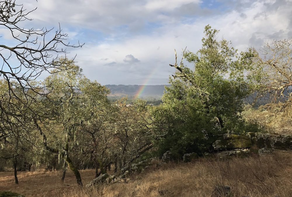 New Rains, New Landscapes this October